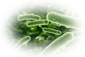 yeast-image